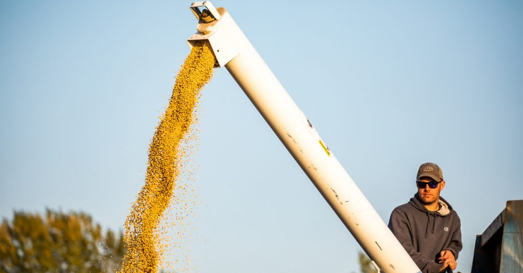 Farmer watching soybeans pour into wagon