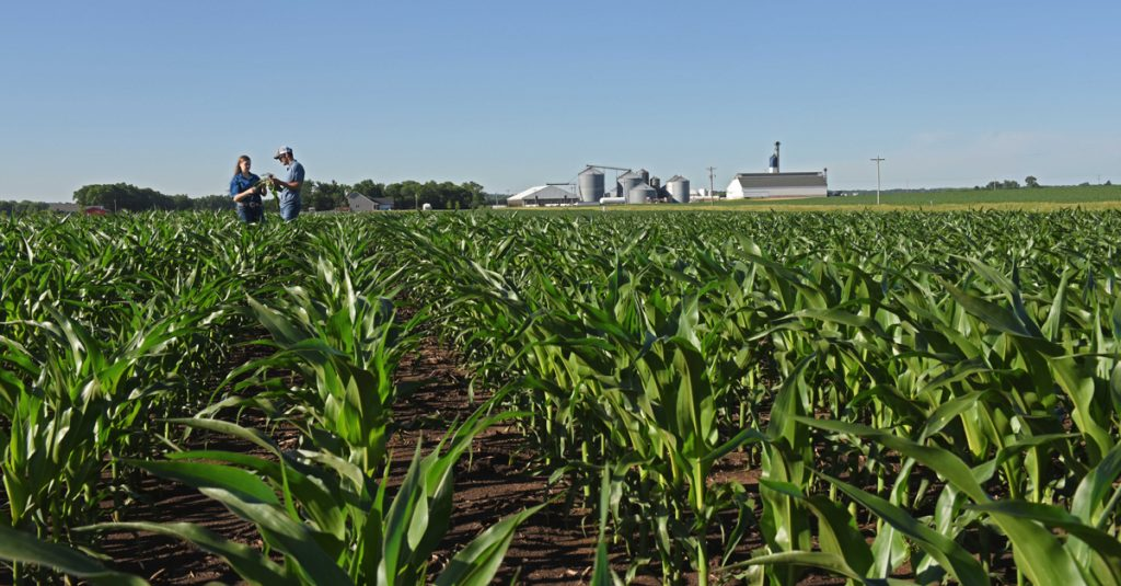 two people in a corn field inspecting plant roots