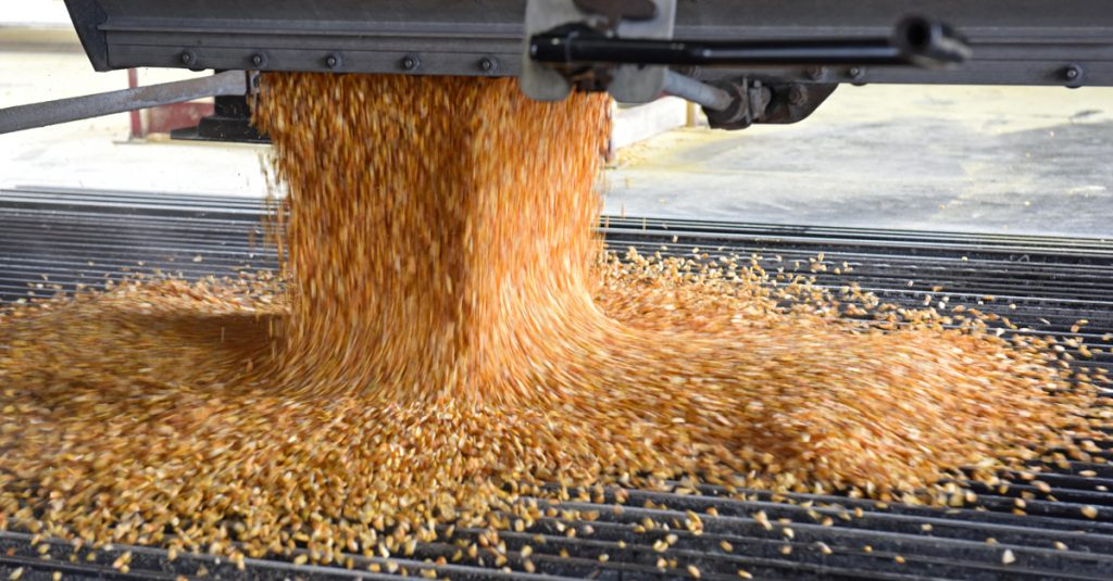 Grain pouring out of a truck